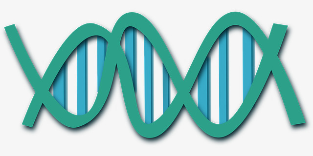 基因链手绘
