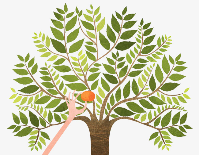 手绘插画树