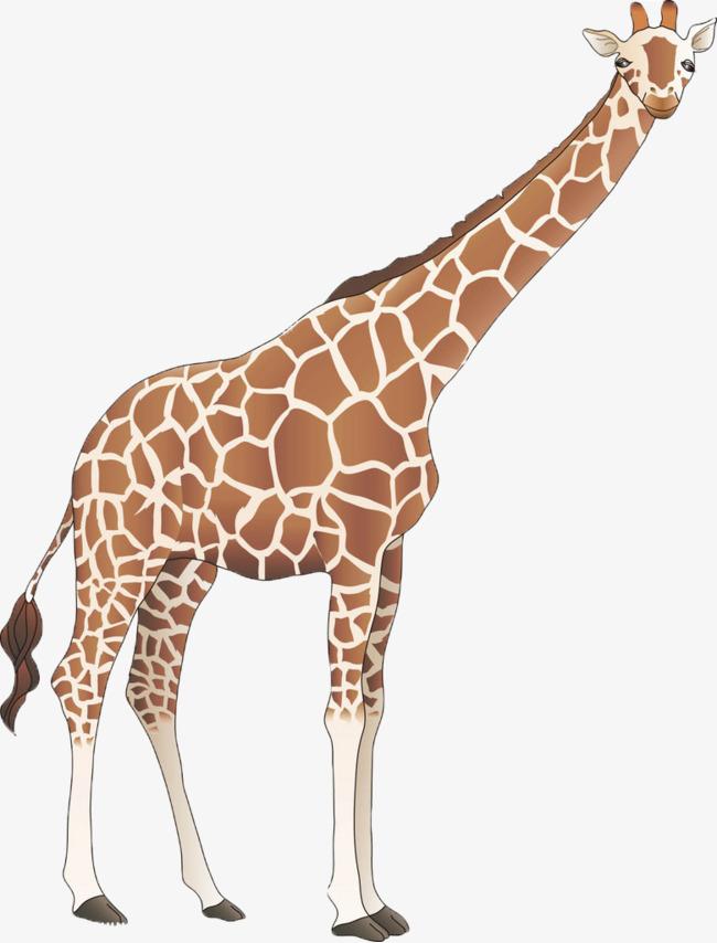 手绘长颈鹿素材图片