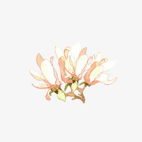 小清新简约水彩手绘白玉兰素材图片免费下载 高清卡通手绘png 千库网