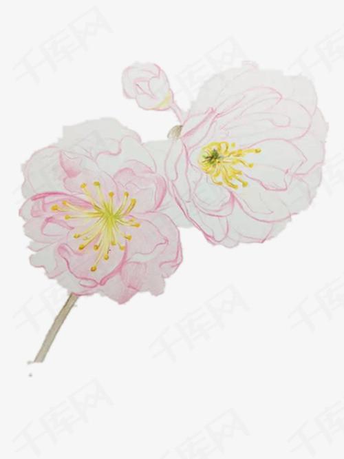 粉色的手绘樱花素材图片免费下载 高清卡通手绘png 千库网 图片编号6002329