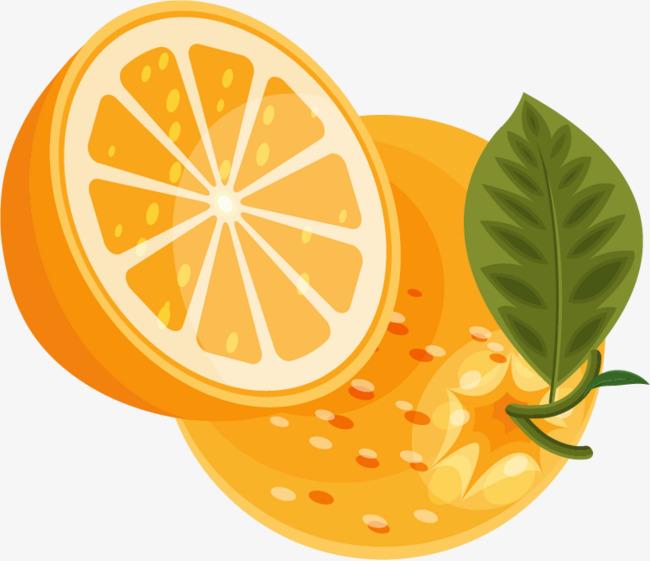 橙子水果png矢量素材