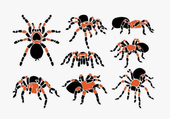 卡通彩色蜘蛛图片