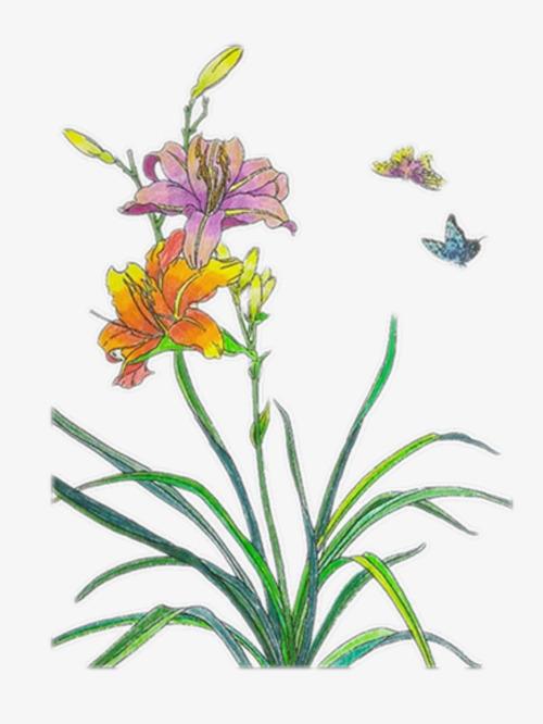 非常好看的彩铅兰花