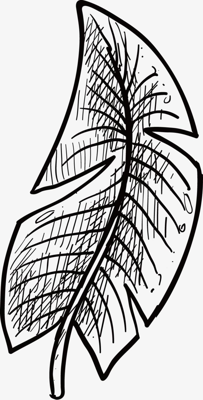 叶子的手绘矢量装饰元素
