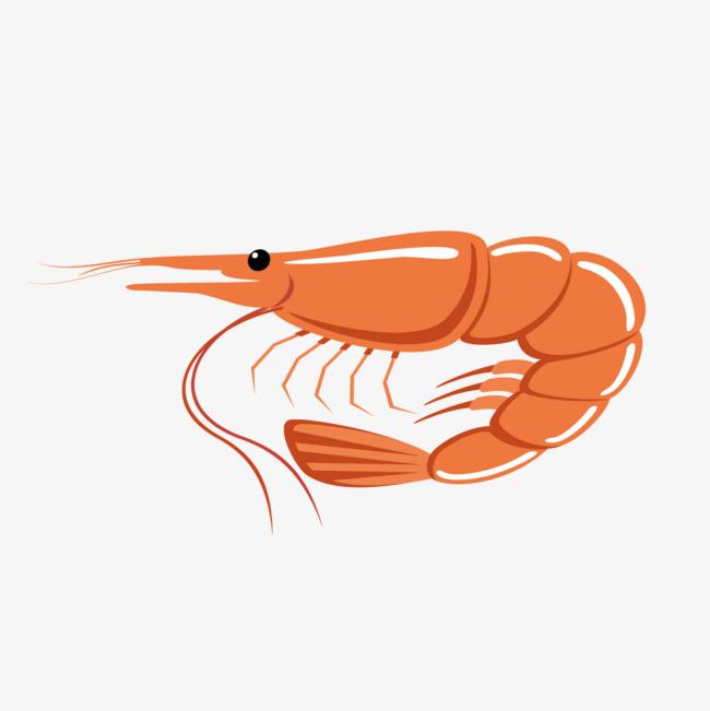 素描虾的画法步骤