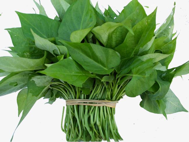 绿色红薯叶素材图片免费下载_高清产品实物png_千库网