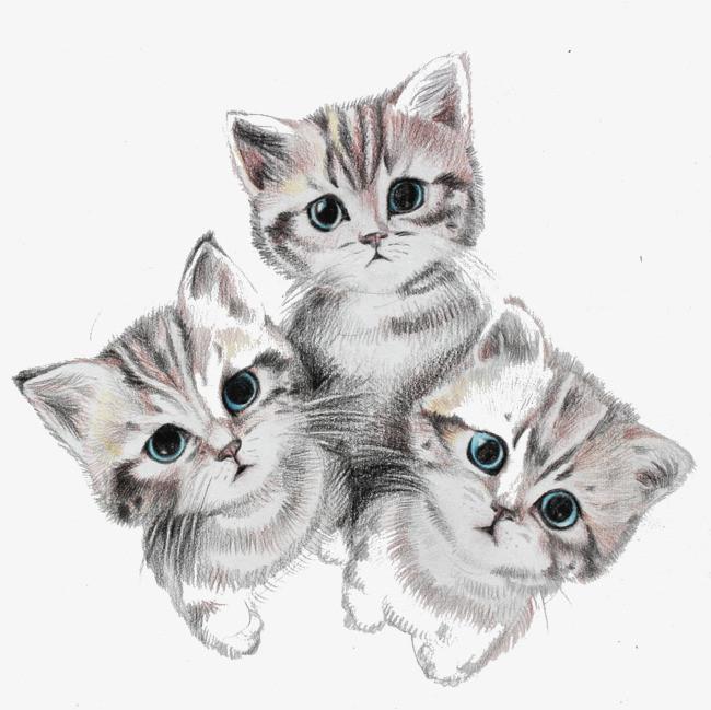 手绘可爱三只小猫咪