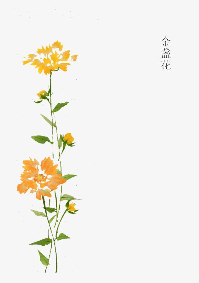 手绘金盏花