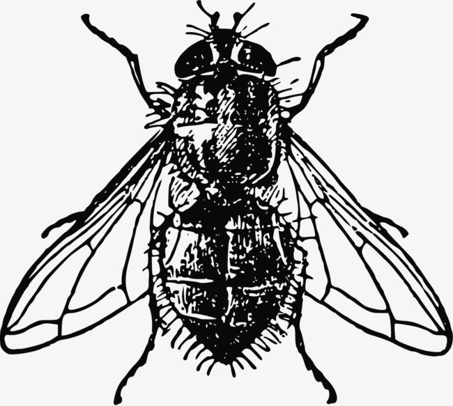 黑白手绘动物苍蝇素材