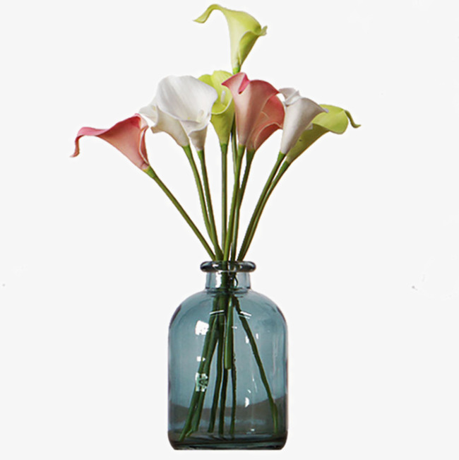 马蹄莲物种教案的多样性花束图片