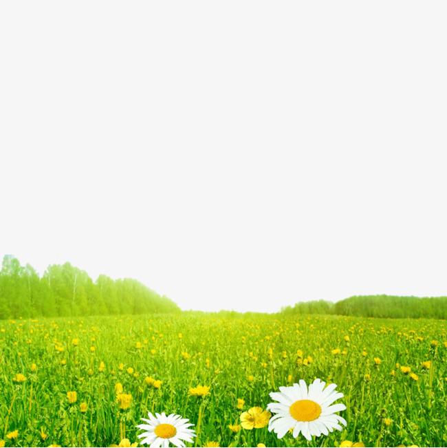 草地上的小花