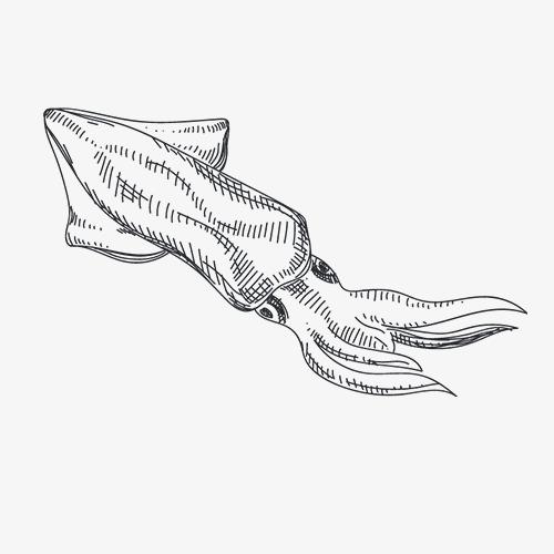 手绘鱿鱼线条图案