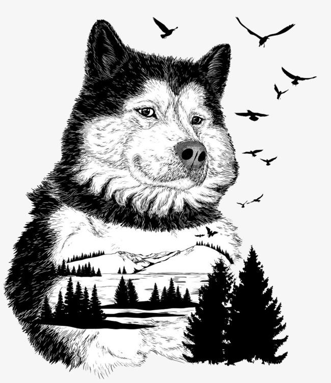图片 > 【png】 狼的黑白画  分类:手绘动漫 类目:其他 格式:png 体积