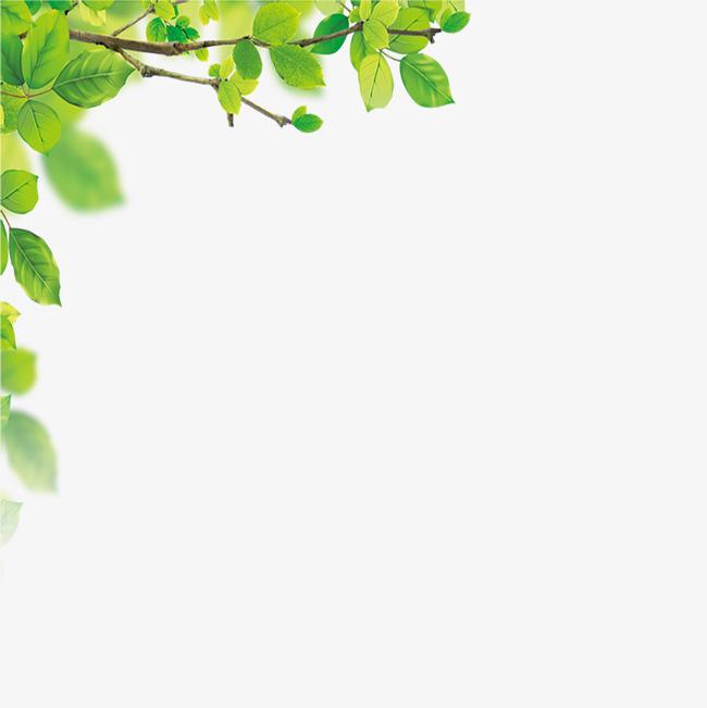 树叶边框素材图片免费下载_高清图片png_千库网(图片