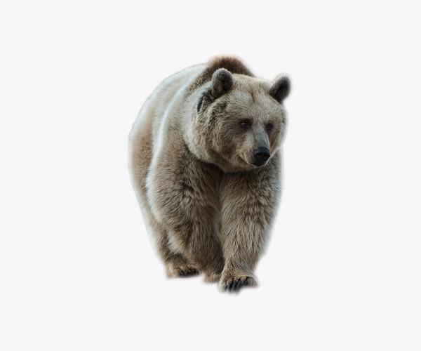 图片 > 【png】 爬行狗熊哺乳动物  分类:产品实物 类目:其他 格式