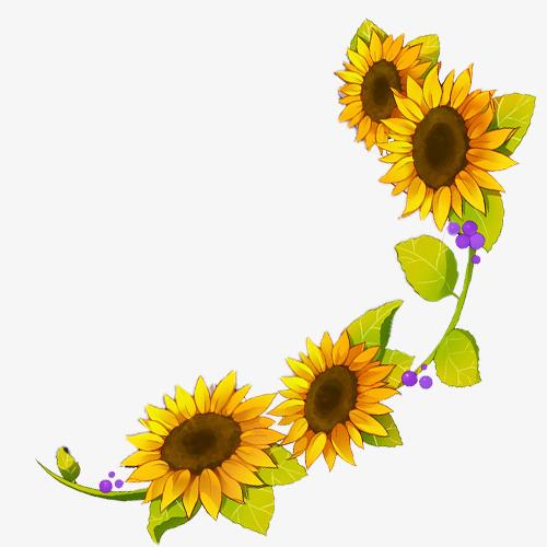 手绘向日葵花