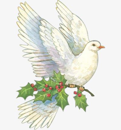 手绘和平鸽素材图片免费下载 高清png 千库网 图片编号6296600图片