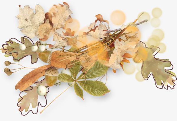 彩铅手绘植物鲜花装饰素材