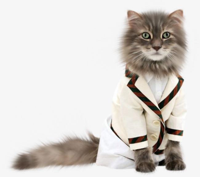 动物衣服制作图纸