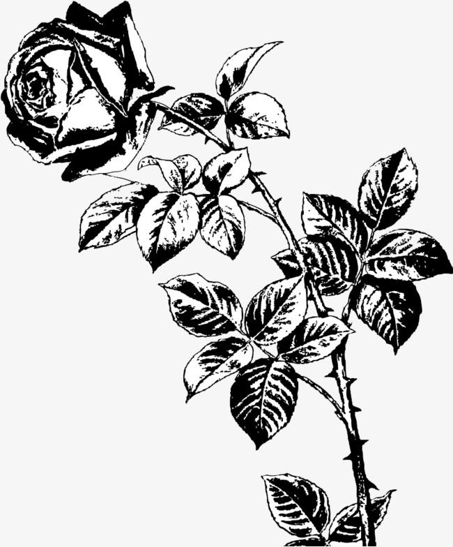 黑白手绘整只玫瑰花