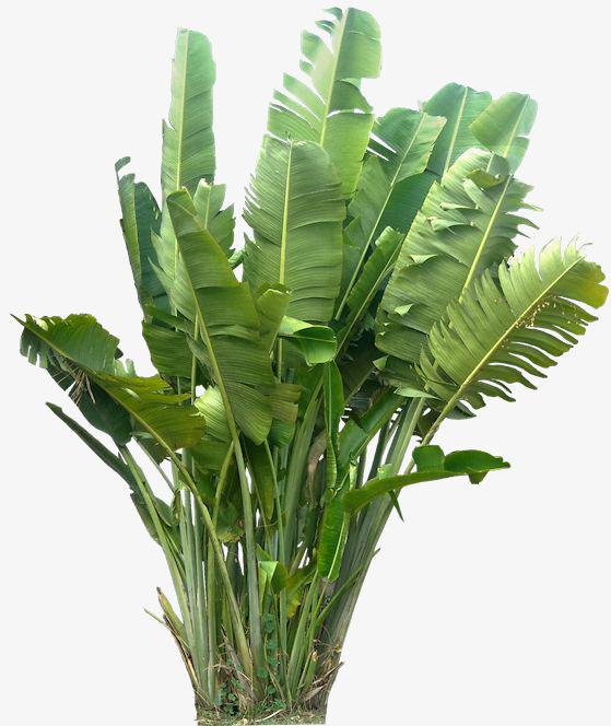 绿色植物 叶子 芭蕉叶背景装饰             此素材是90设计网官方图片
