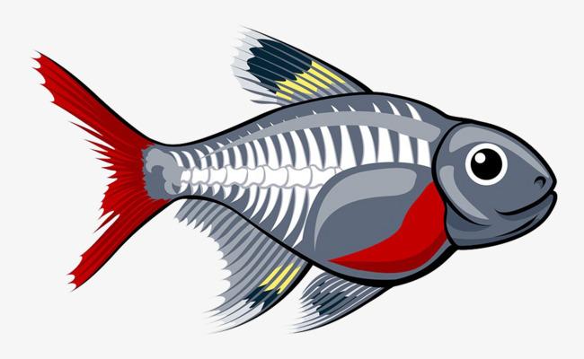 手绘彩色鱼