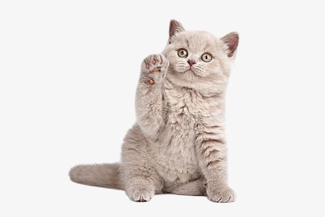 图片 > 【png】 萌宠猫咪  分类:手绘动漫 类目:其他 格式:png 体积