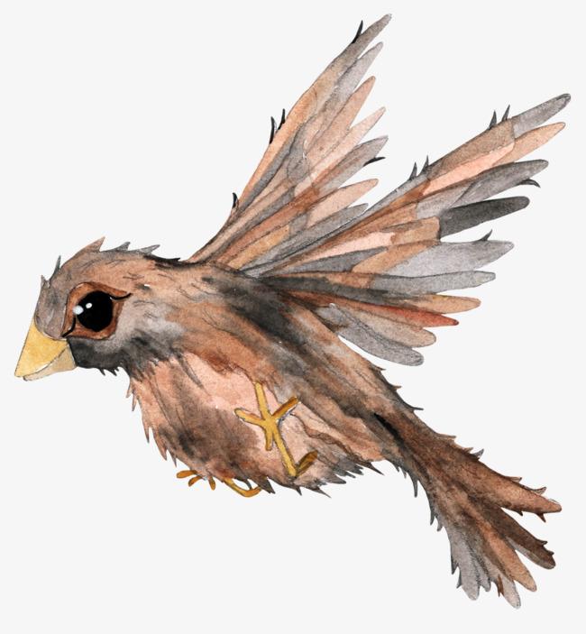 中国画飞鸟