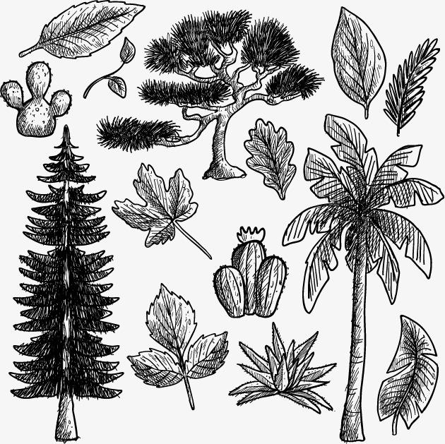 矢量手绘树木