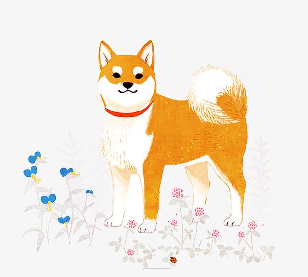 手绘柴犬素材图片
