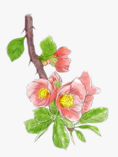 手绘海棠花图片