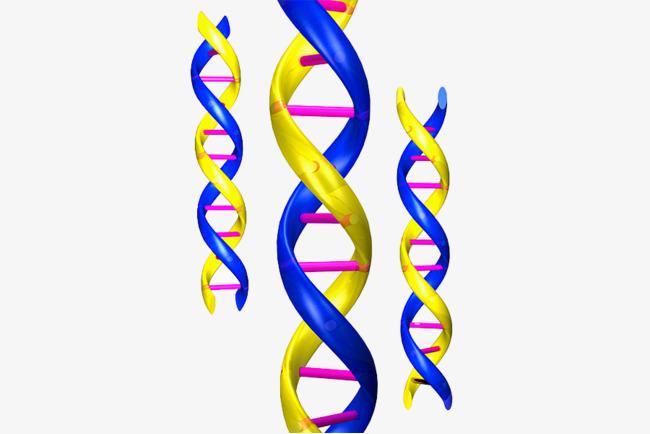 基因结构图分析