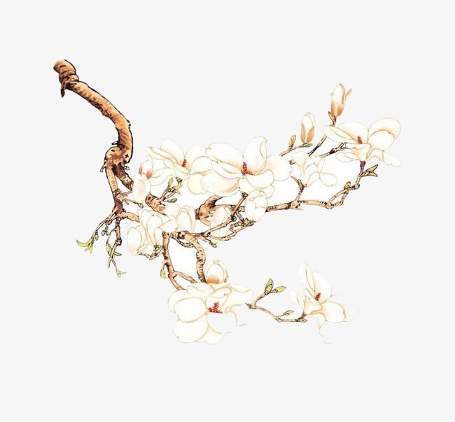 图片 > 【png】 白兰花朵  分类:手绘动漫 类目:其他 格式:png 体积