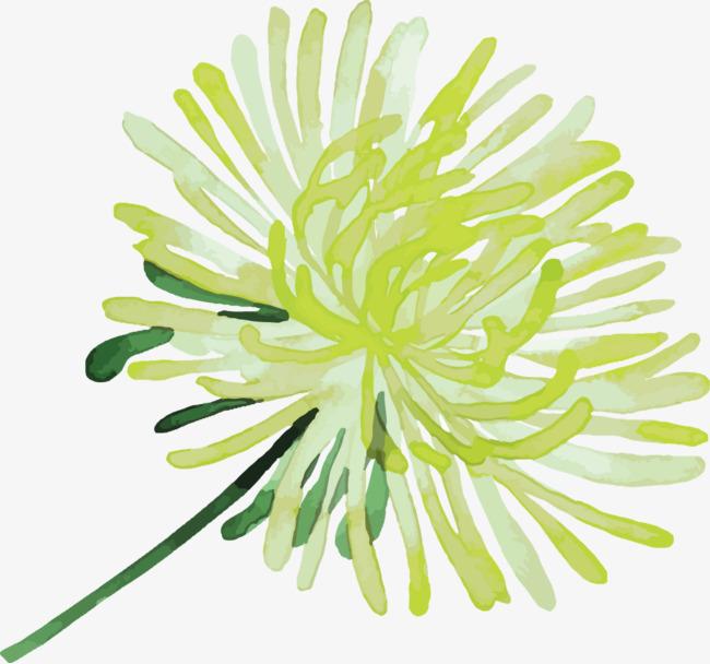 水彩手绘菊花