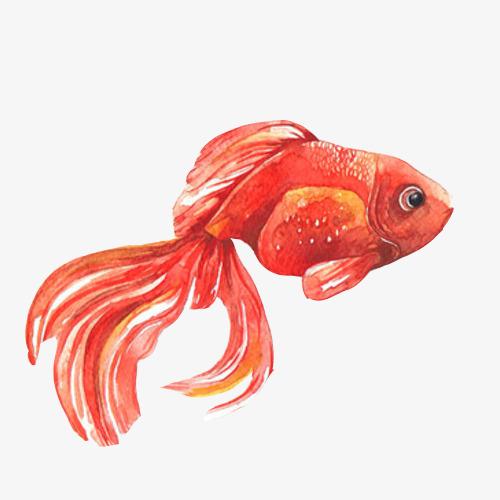 金鱼飘逸水彩画素材图片