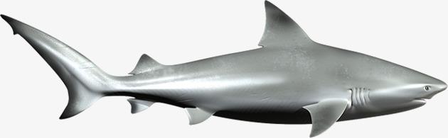 亮色 公牛鲨 猛兽 海洋生物素材             此素材是90设计网官方