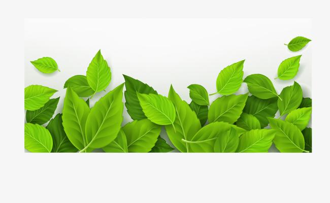 绿色树叶矢量文字输入框免抠素材