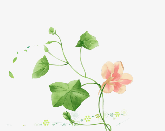图片 > 【png】 手绘绿植花