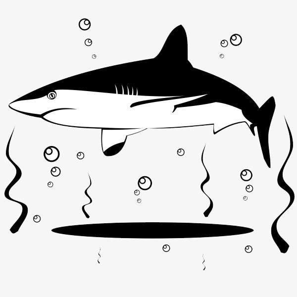 卡通黑白可爱鲨鱼