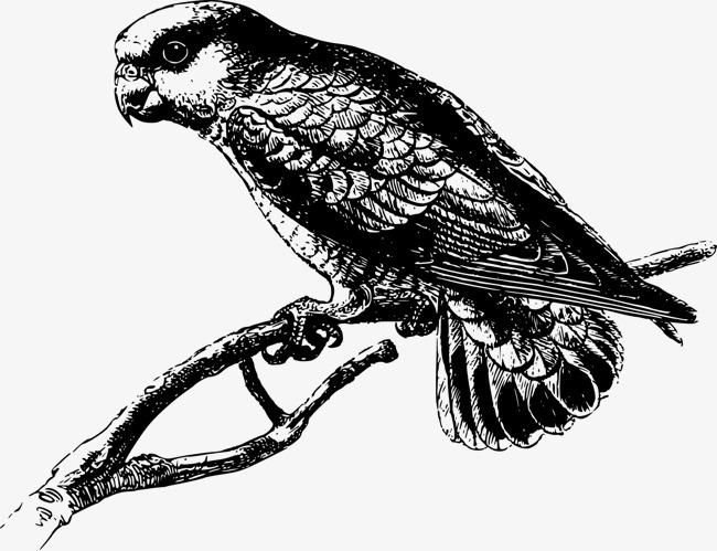 矢量手绘鹦鹉