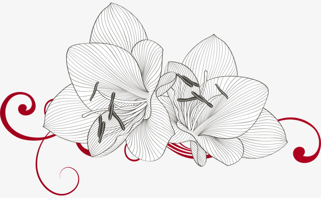 矢量手绘百合花