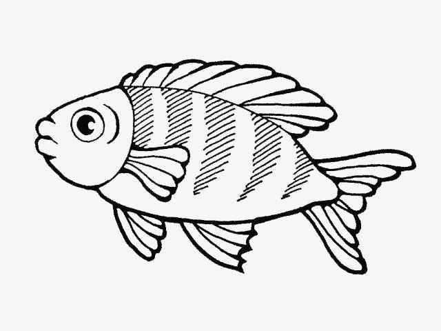 简笔画鱼,鱼的简笔画图片(3)