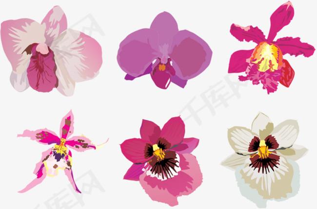 手绘蝴蝶花手绘花朵植物蝴蝶花
