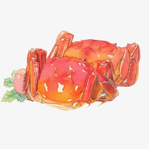 大闸蟹手绘画素材图片