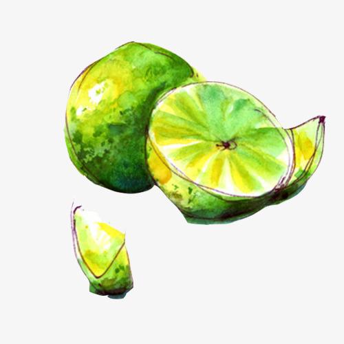 青柠檬手绘画素材图片
