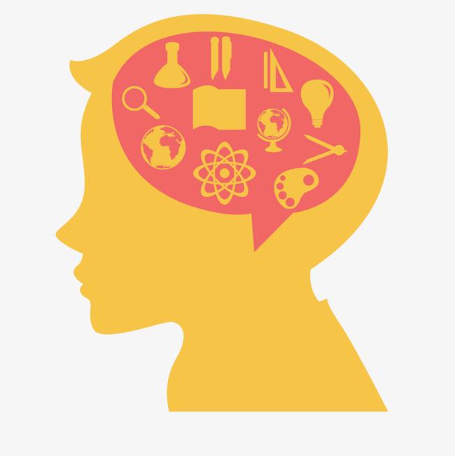 儿童大脑结构图