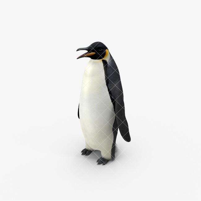 企鹅 动物 南极动物 小企鹅