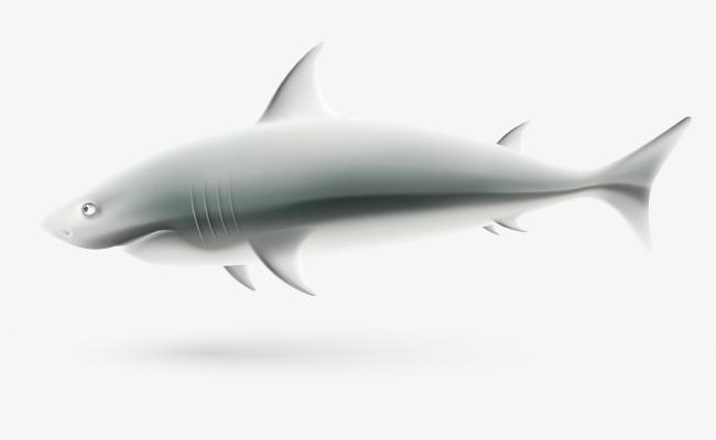 矢量手绘大白鲨