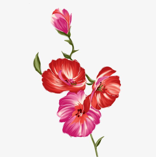 手绘红花素材